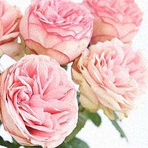 Box Of Garden Rose Bridal Piano