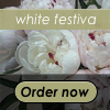 White Festiva Peony Bouquet