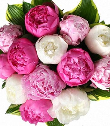 Pink & white & fuchsia, a 3 tone Peony bouquet
