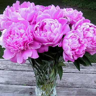 Bouquet with medium pink Peonies