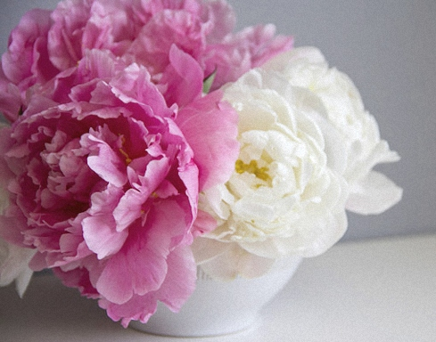 Pink & white, a two tone Peony bouquet