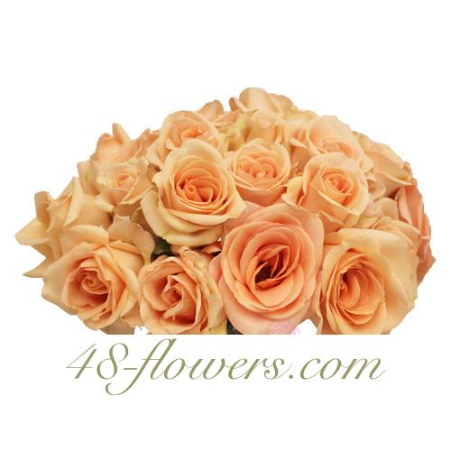 Peach Rose Alejandra