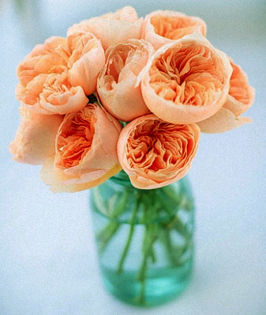 vase gift with juliet garden rose - Peach Garden Rose