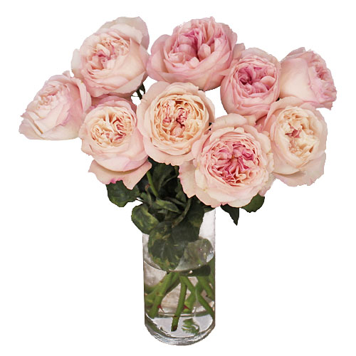 vase gift with keira garden rose - Blush Garden Rose Bouquet