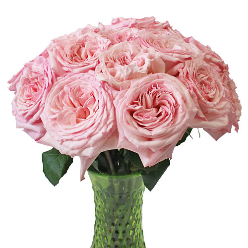 Vase Gift with Pink O\'Hara Garden Rose