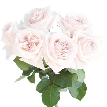 Vase Gift with White O\'Hara Garden Rose